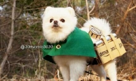 Attack on Pomeranian Kills Titans, Warms Hearts