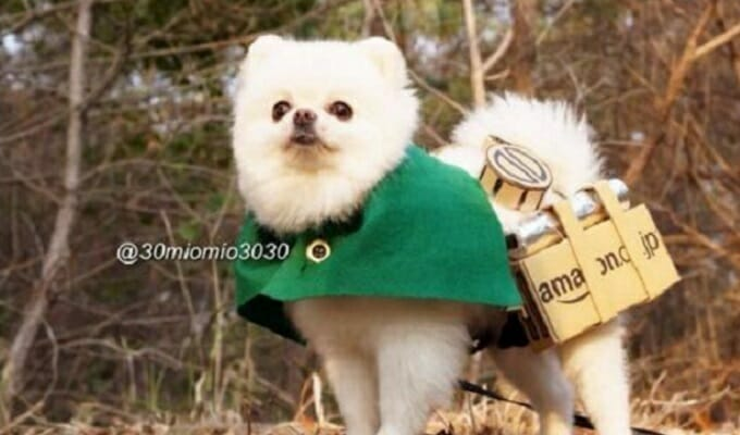 Attack on Pomeranian Kills Titans, Warms Hearts