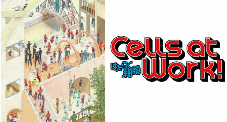 Aniplex of America Plans Blu-Ray, English Dub For Cells At Work!